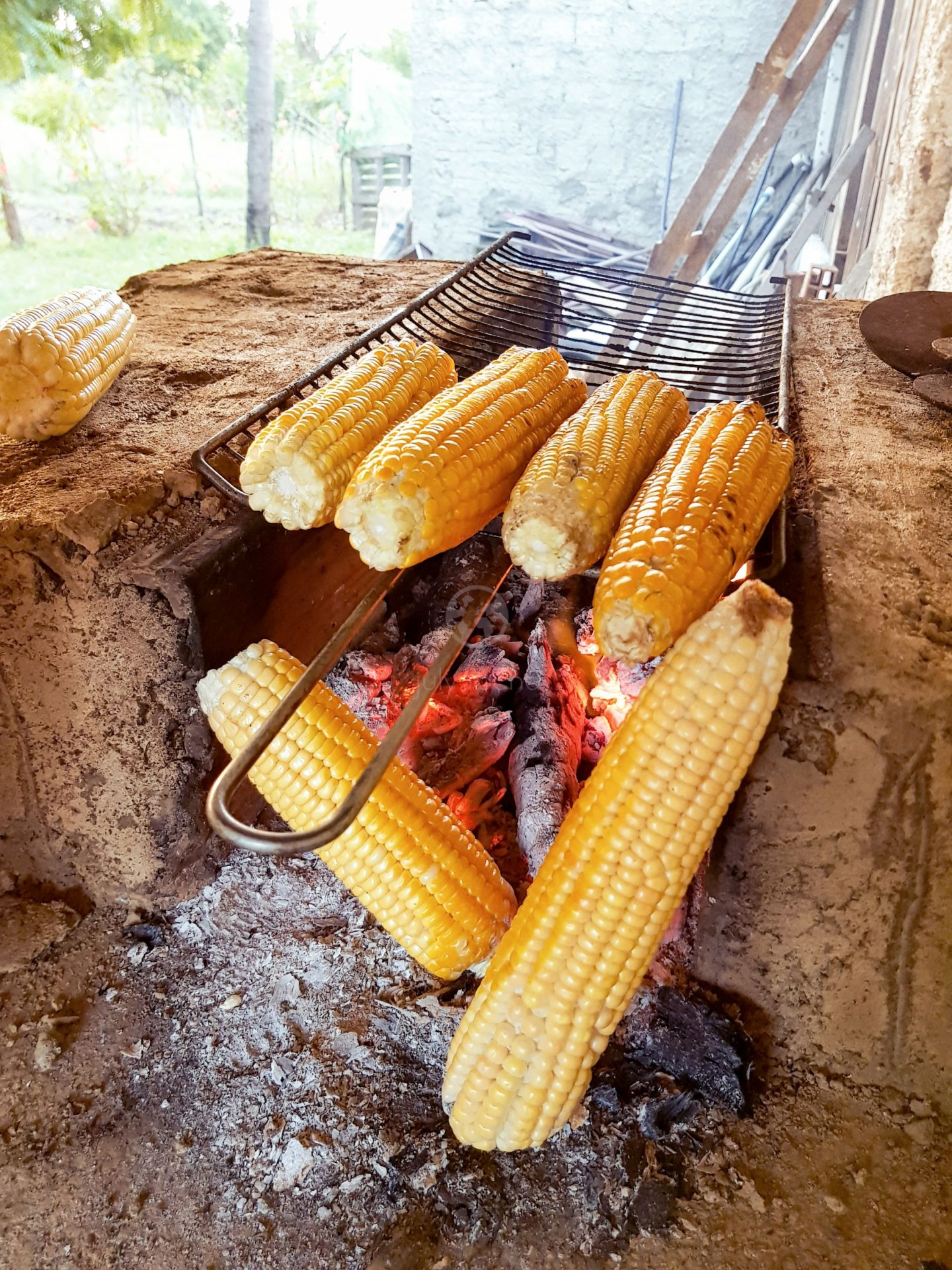 Roasting corn at the typical stove from the Northeast's Sertão: handmade stove, built with clay and lit with wood.