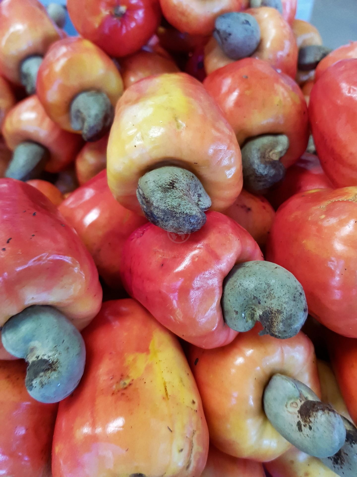 Fresh cashew fruit. Very popular - and delicious. Curiosity: the portuguese name for this fruit is Caju, that's where Aracaju city gets its name (land of the Araras - macaw bird - and Caju).